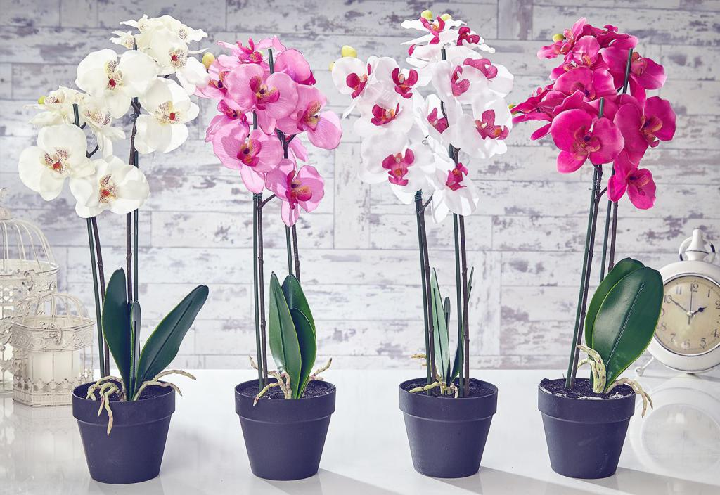 Орхидея как ухаживать