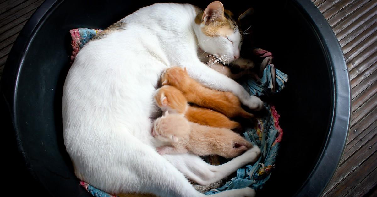 К чему снятся кошки и котята?