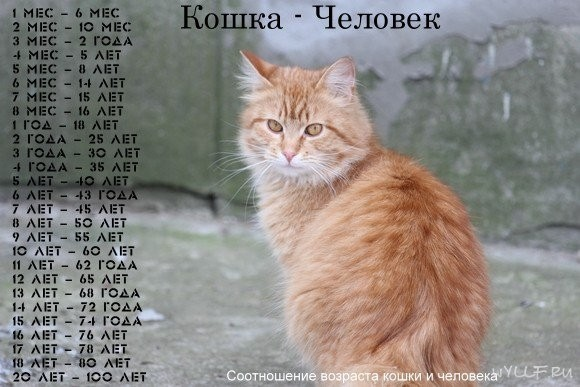 Сколько живут коты?