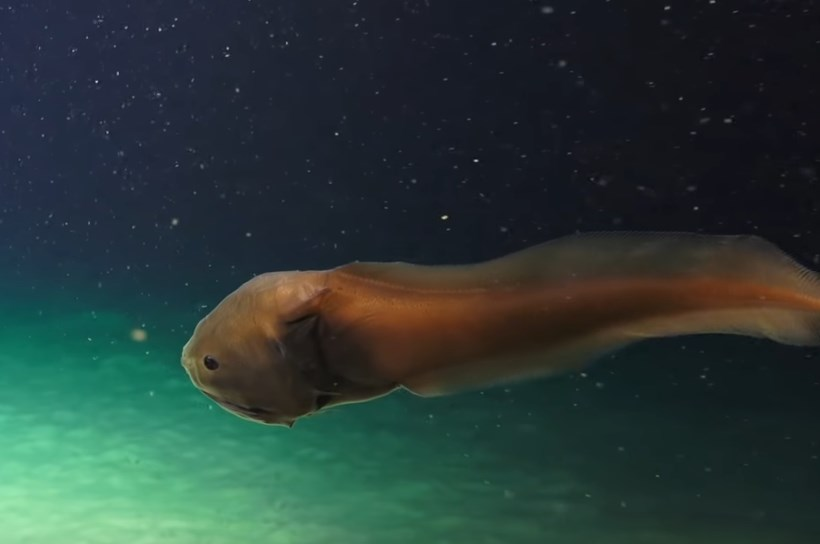 Неизвестные существа были засняты под водой возле рифа Нингалу