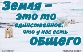 27 февраля – всемирно известный день полярного медведя.