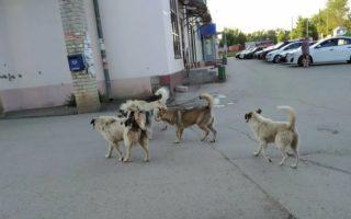 Беспредел бездомных псов в Шумерлю